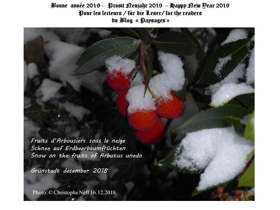 Neujahrspostkarte 2019 blog paysages