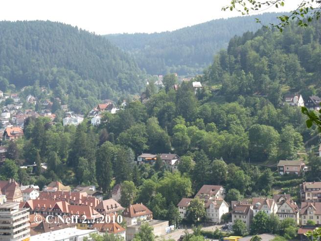 Verwaldung am Sonnenberg - Stadtpark in der Talstadt Schramberg Juli 2010