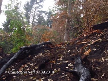 waldbrandfläche Schiltach - Kirchberg - Zustand am 07.09.2018