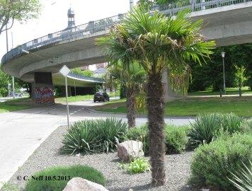 Mannheim - les palmier