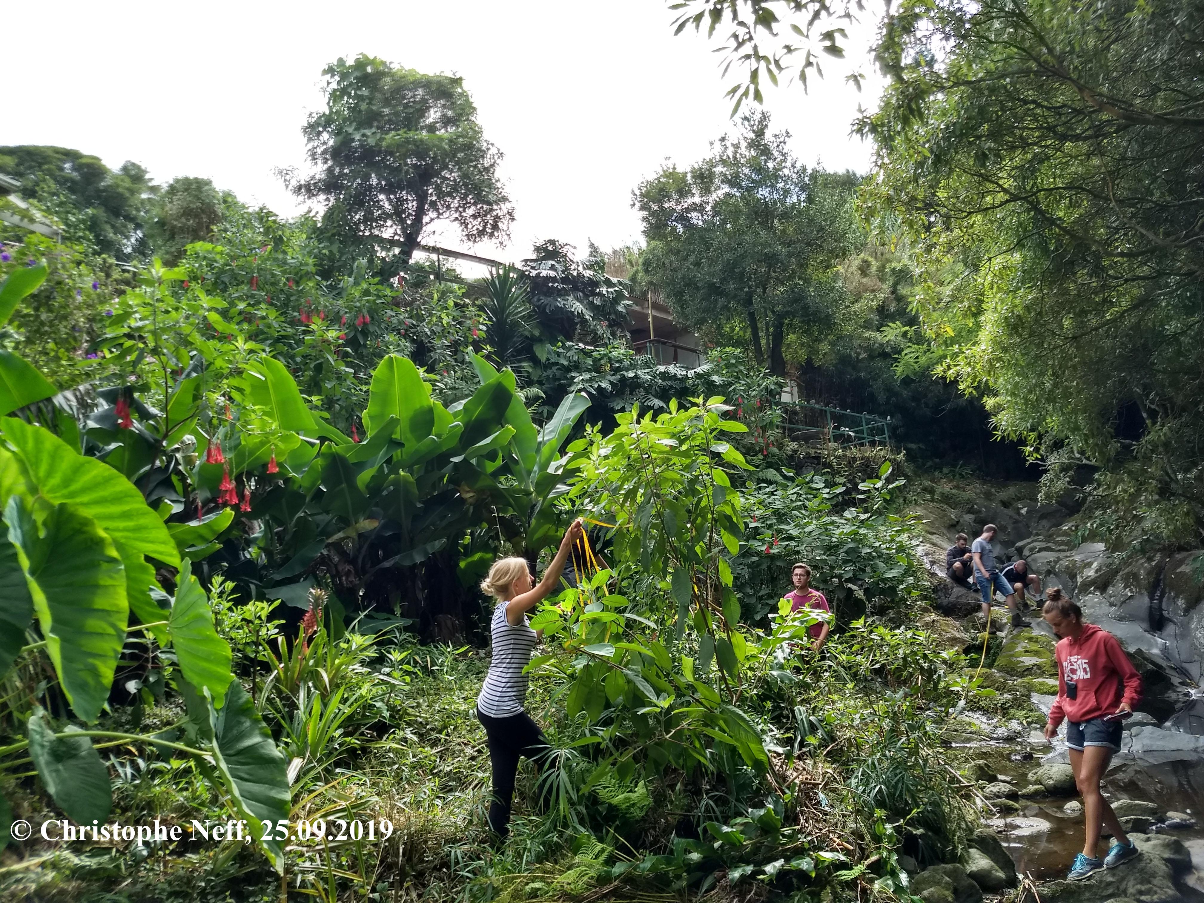 Relevé de végétation dans le jardin du O Esconderijo (25.09.2019 Cedros-Faial)