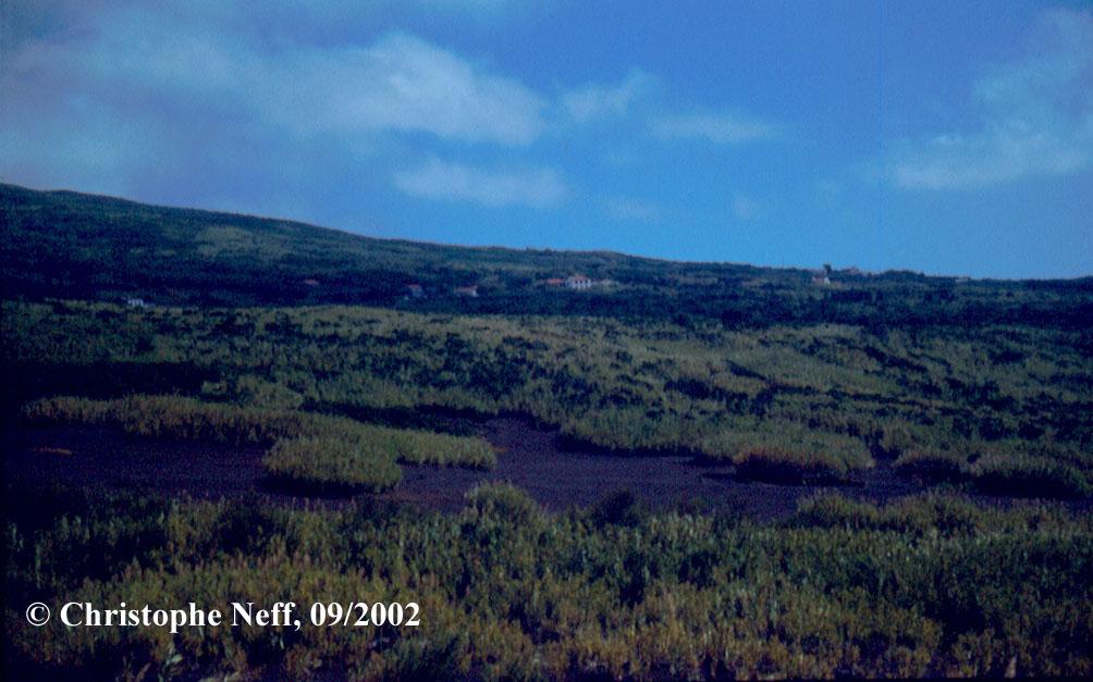 Vulk. sukz. Arundo donax + Erica azorica Capelo-Capelinhos Aschefelder 2002